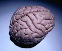 humanbrain.jpg